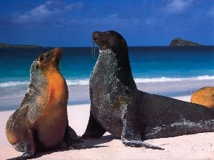 hd-desktop-wallpaper-sea-lion-wallpaper