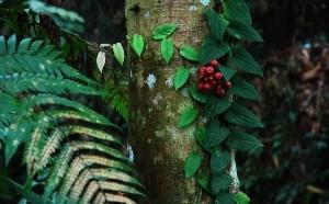 jekzoticheskaja-rastitelnost-ostrova-bali