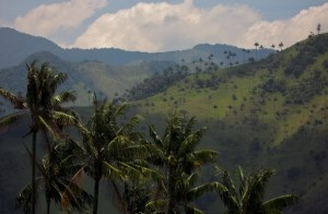 colombia-salento-highpalms_5